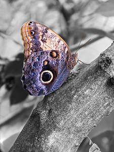2013 0408 ECDS Butterfly Pavilion 76 select color