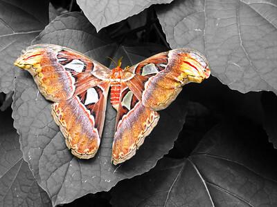 2013 0408 ECDS Butterfly Pavilion 82 select color