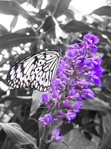2013 0408 ECDS Butterfly Pavilion 40 select color