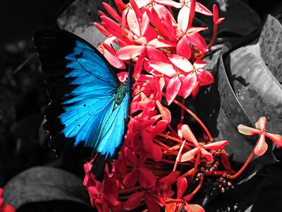 2013 0408 ECDS Butterfly Pavilion 45 select color