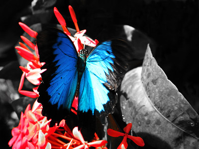 2013 0408 ECDS Butterfly Pavilion 46 select color
