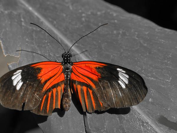 2013 0408 ECDS Butterfly Pavilion 31 select color