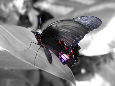 2013 0408 ECDS Butterfly Pavilion 47 select color