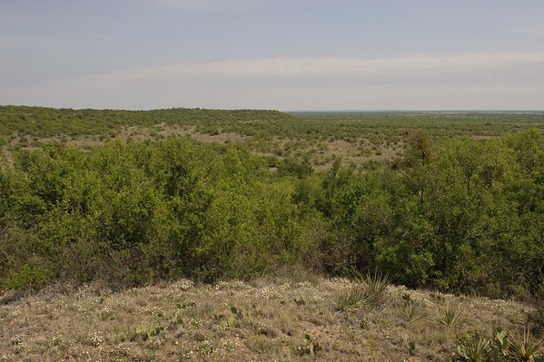 Wildlife areas for hunting at Stasney's Cook Ranch in Albany, Texas.