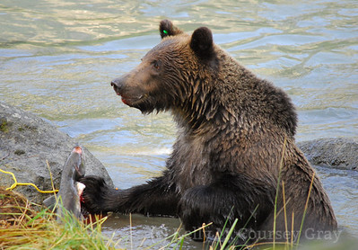 bear with salmon and lipstick