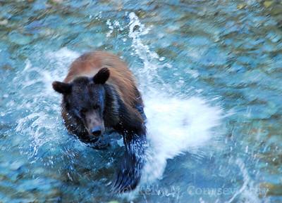 KCG running bear