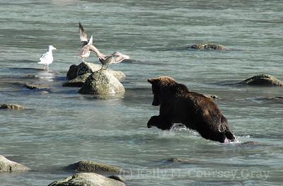 bear jumps 1