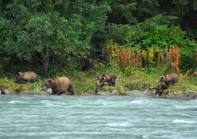 mom and 4 cubs 1
