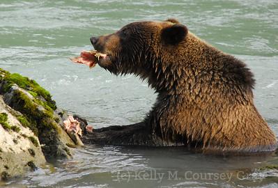bear eats fish with gusto