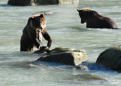2 bears and a fish on the rock