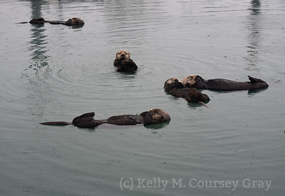 lots of sleeping otters 1