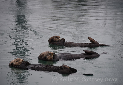 3 sleeping otters 1