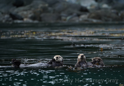 Inian Sea Otters 3