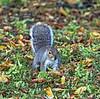 Squirrel at Glasgow Botanical Gardens - 11 October 2021