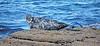 Seals at Port Gordon - 10 May 2018