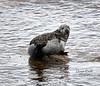 Seals at Port Gordon - 2 October 2021