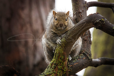 Fat, Judgmental Squirrel