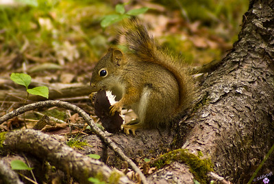 Wildlife - Small Animals