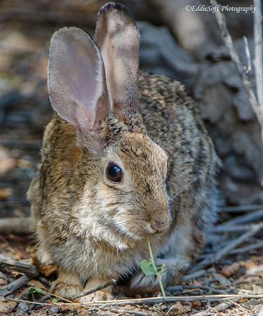 Henderson Nevada - Cute Bunnies August 2013