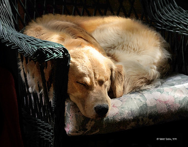 It's Snoozin' Time Again M10_0223 art print