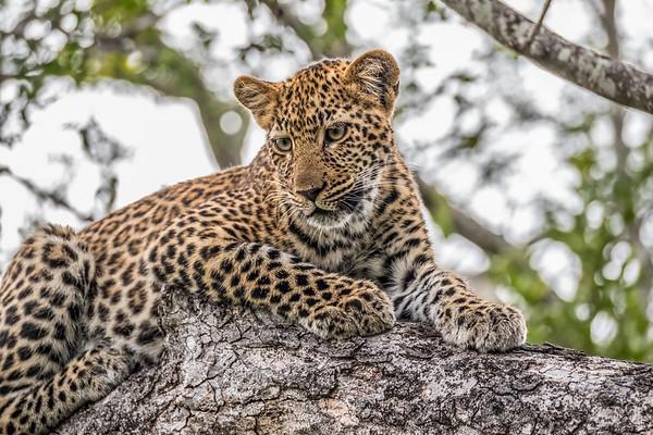 Wildlife of Africa - 2017