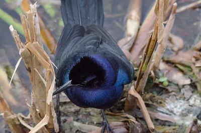 Wildlife of Florida