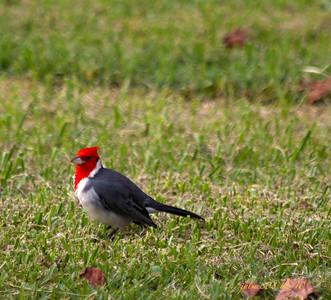 Cardinal123110