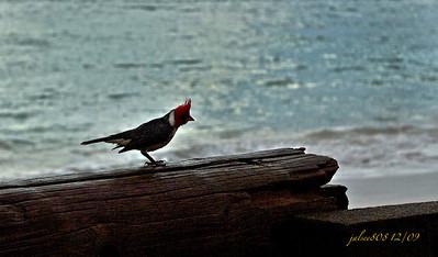 Birdie120910