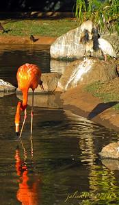 flamingos072410