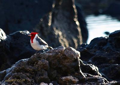 Cardinal020511