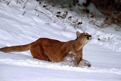 """Dashing Through the Snow"""