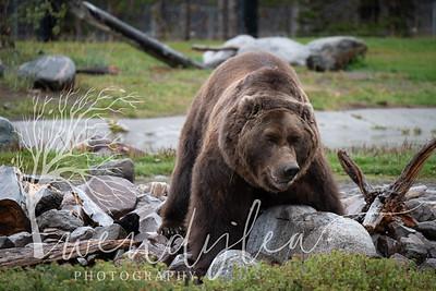 wlc Yellowstone 0919 5352019