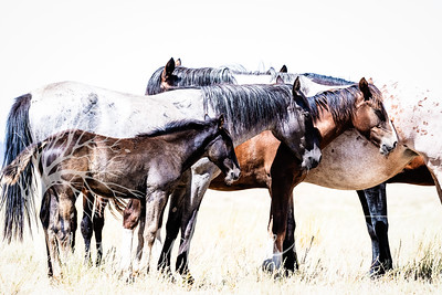wlc  Z&B wild horses 1062019-2
