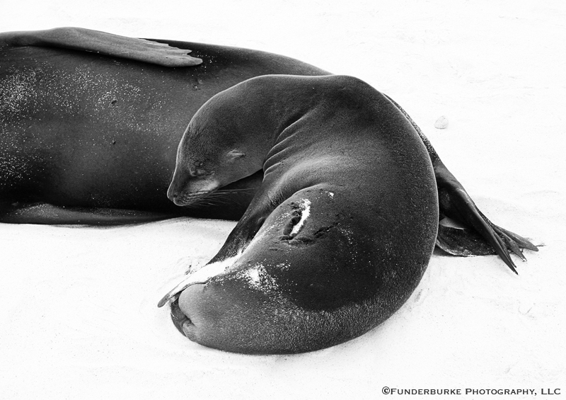 Sea Lions II, Galapagos Islands