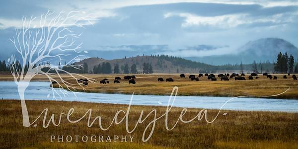 wlc Yellowstone 0919 2742019