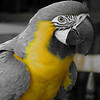 Macaw 3 jpg