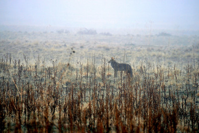 """Hunter in the Mist"""
