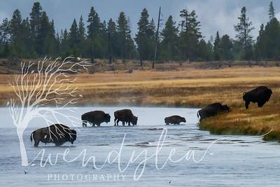 wlc Yellowstone 0919 2712019