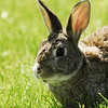 Bunny at our campground outside Custer, South Dakota.