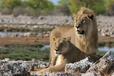Etosha National Park, Namibië.