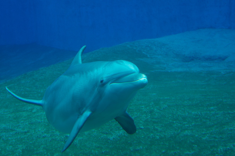 I could have watched the dolphins all day. They are just fascinating - Mirage Hotel
