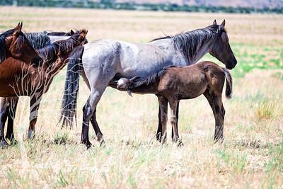 wlc  Z&B wild horses 1292019
