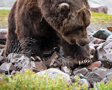 wlc Yellowstone 0919 5342019