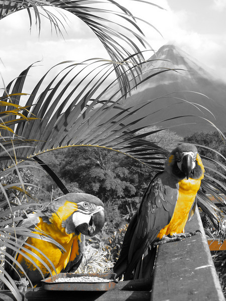 Macaw 2 jpg