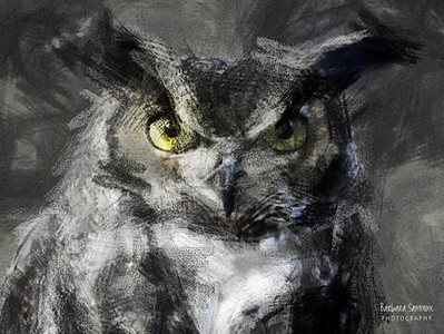 """Dudley"" - Great Horned Owl The Carolina Raptor Center ~ Huntersville, NC  ~Processed in PostworkShop 3; rough sketch pencil"