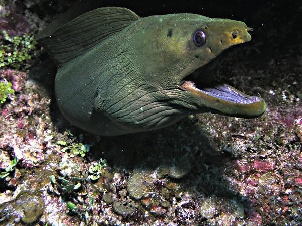 P1010037-moray