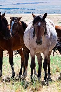 wlc  Z&B wild horses 892019