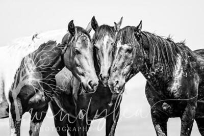 wlc  Z&B wild horses 1082019