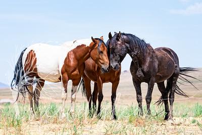 wlc  Z&B wild horses 1132019