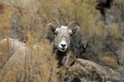 """""""Ewe in Sage"""""""